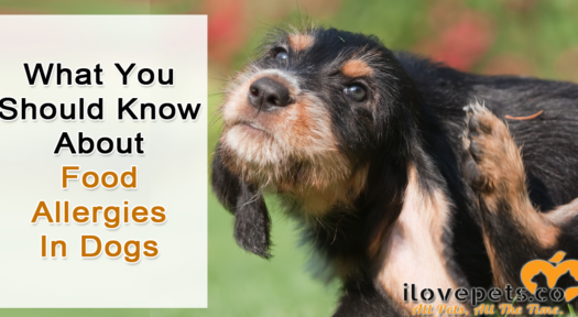 What You Should Know About Food Allergies In Dogs