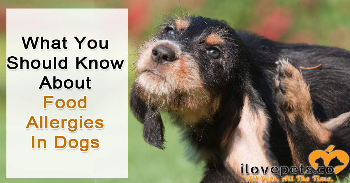 What You Should Know About Food Allergies In Dogs - Symptoms. solutions and causes