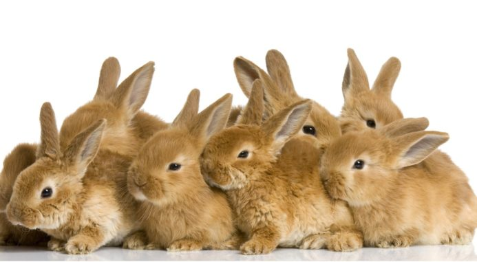 How To Care For An Orphaned Rabbits?