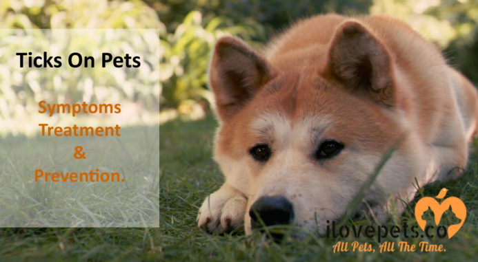 Ticks On Pets – Symptoms, Treatment And Prevention