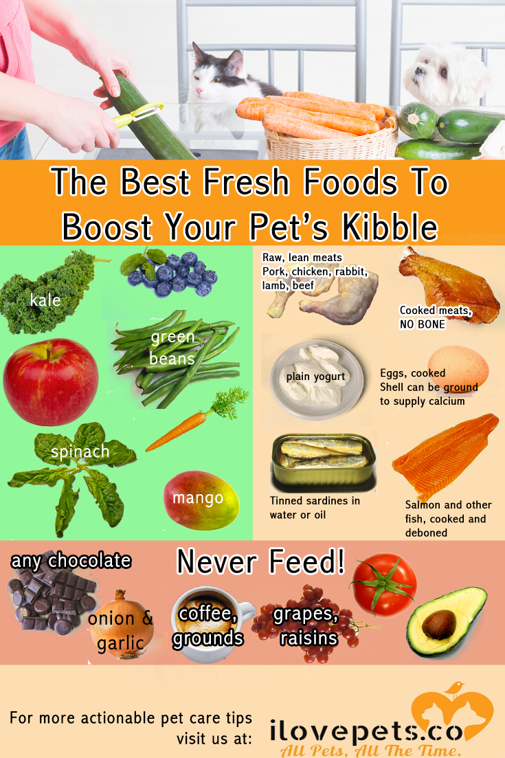 The best, most nutritious fresh foods to add to #cat or #dog kibble.
