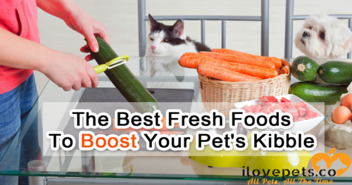 Boost your cat or dog's dry kibble with these healthy, fresh, cancer-preventing foods.