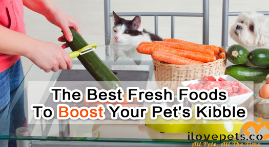 The Best Fresh Foods To Boost Your Pet's Kibble