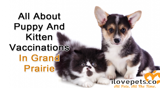 All About Puppy And Kitten Vaccinations In Grand Prairie, Texas