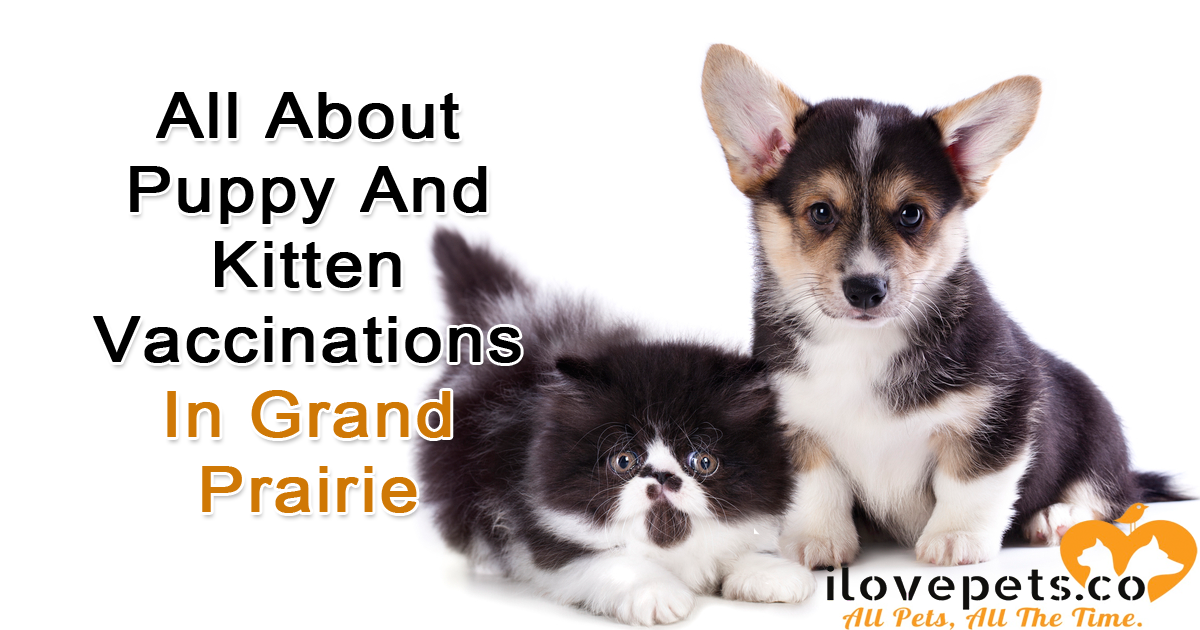 Grand Prairie veterinarians for puppy and kitten vaccinations