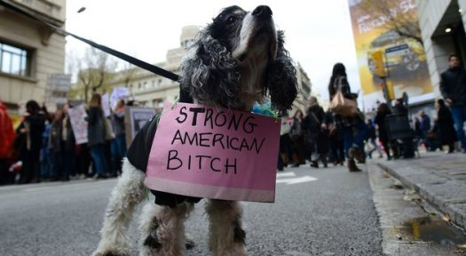 Adorable Pets Who Supported The Women's March In Washington
