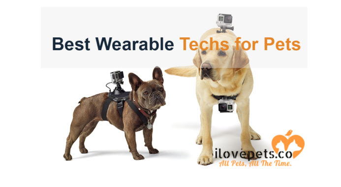 5 Best Wearable Techs for Pets