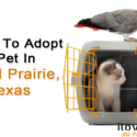 Where To Adopt A Pet In Grand Prairie, Texas