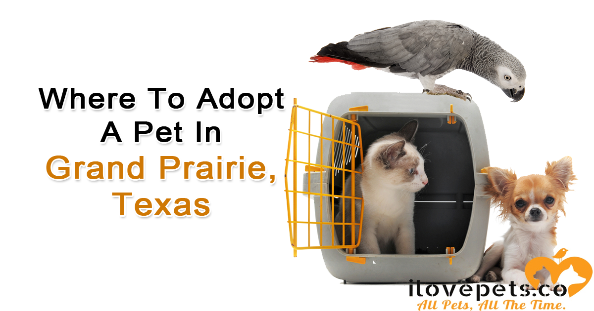 Grand Prairie Texas Pet Adoption: Best Shelters And Rescues