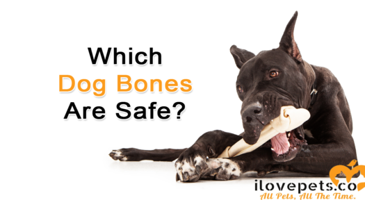 Which Dog Bones Are Safe? Finding The Perfect Chew Bone For Your Aggressive Chewer