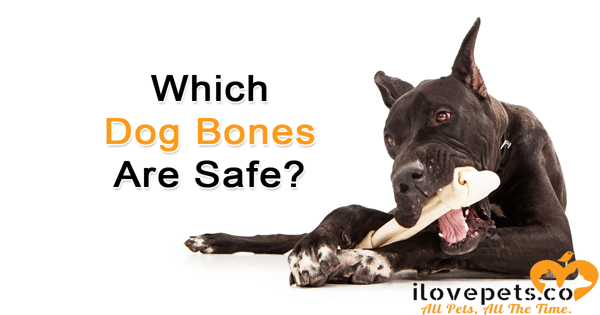 Which dog bones are safe? What you need to know about giving your dog any kind of bone: rawhide, raw meaty bones, Yak chews and more.