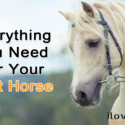 Everything You Need Before You Get Your First Horse