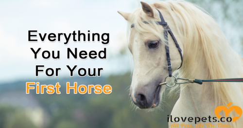 Everything You Need For Your First Horse
