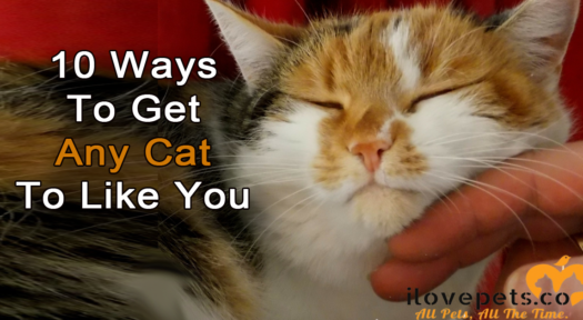 10 Ways To Get Any Cat To Like You
