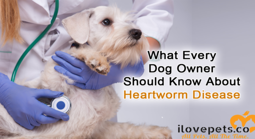 What Every Dog Owner Should Know About Heartworm Disease