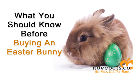 What You Should Know Before Buying An Easter Bunny As A Pet