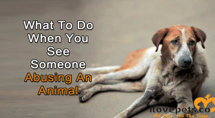 What To Do When You See Someone Abusing An Animal