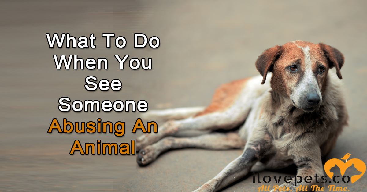 What To Do When You Witness Animal Abuse Or Neglect