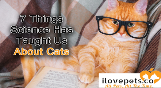 7 Weird Things Science Has Taught Us About Cats