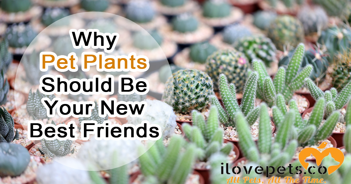 Why Pet Plants Should Be Your New Best Friends