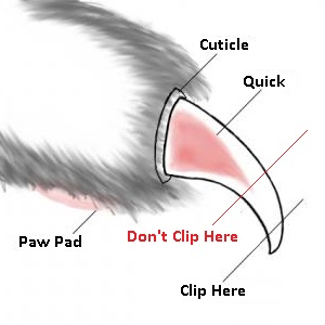 How to trim your cats' nails?