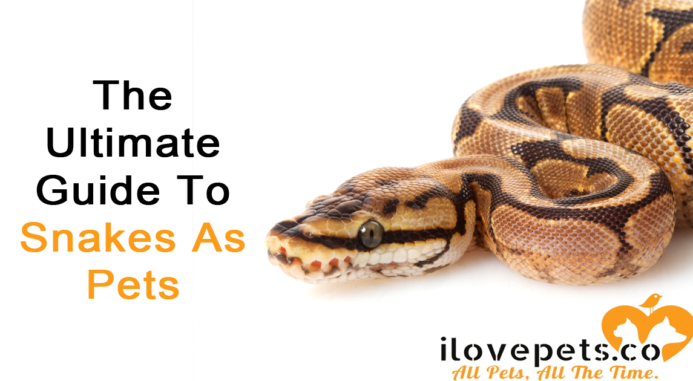 The Ultimate Guide To Snakes As Pets