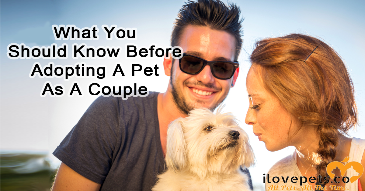 What You Should Know Before Adopting A Pet As A Couple