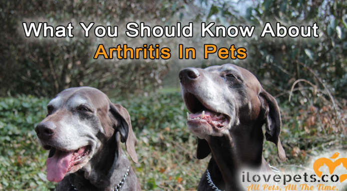What You Should Know About Arthritis In Pets