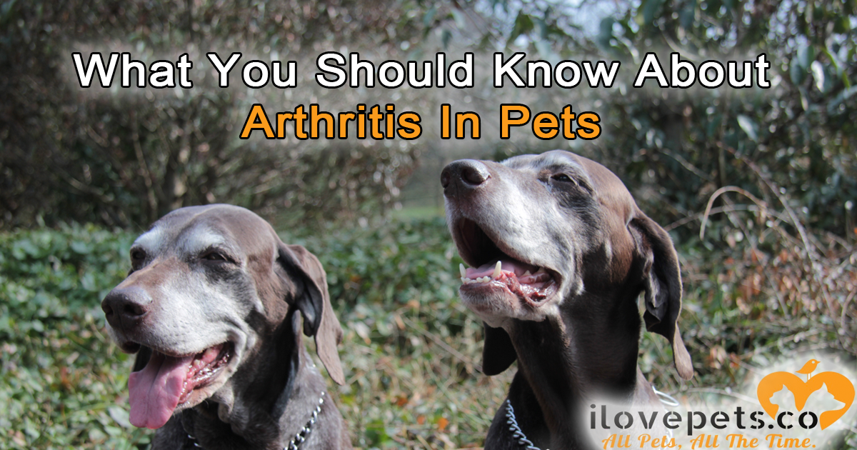 What You Should Know About Arthritis In #Pets