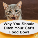 Why You Should Ditch Your Cat's Food Bowl