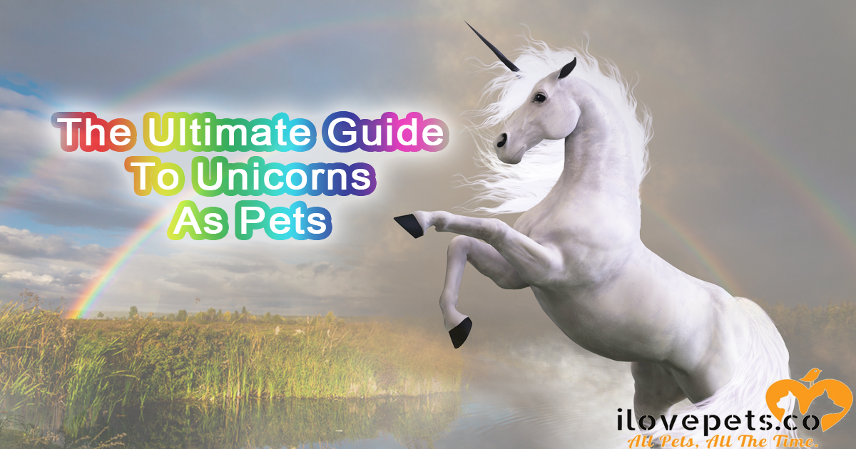 The Ultimate Guide To Unicorns As Pets