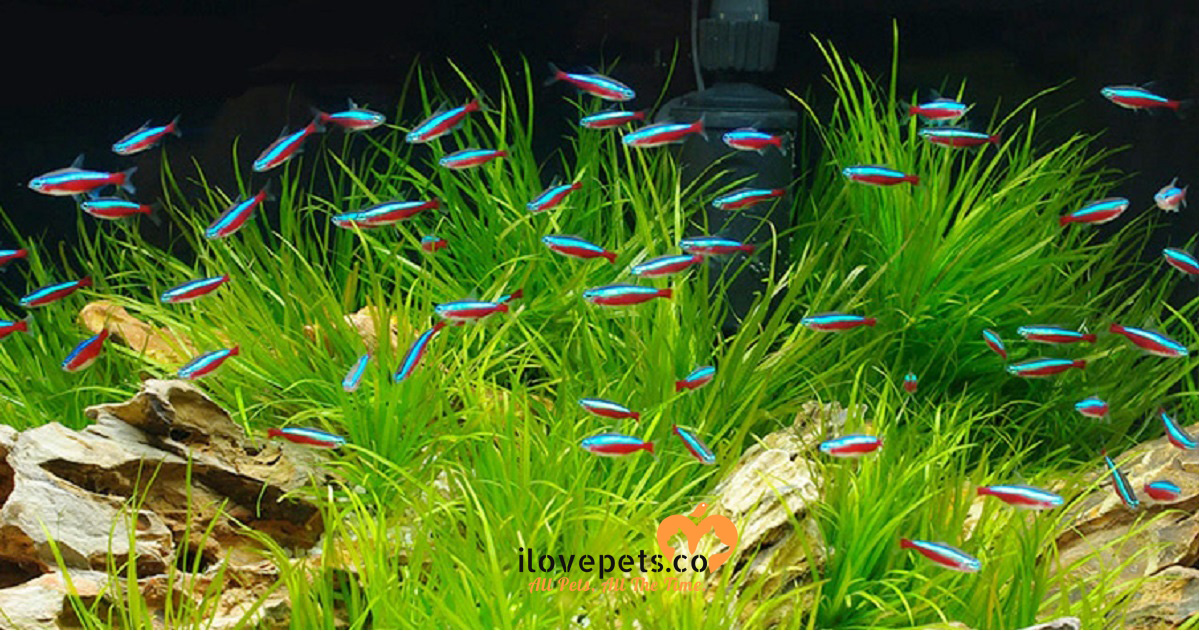How many tetra fish can i put in a 5 10 20 gallons or for Tetra acquario