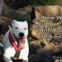 6 New Ways To Have Fun With Your Dog This Summer