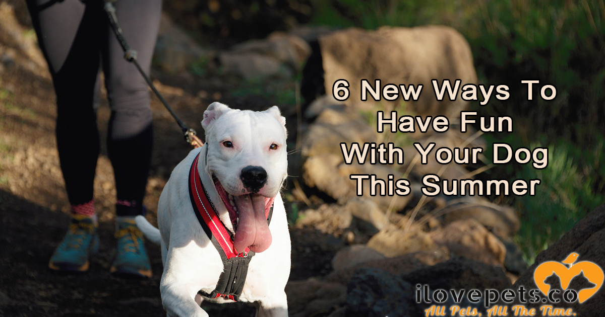6 Ways To Have Fun With Your Dog This Summer