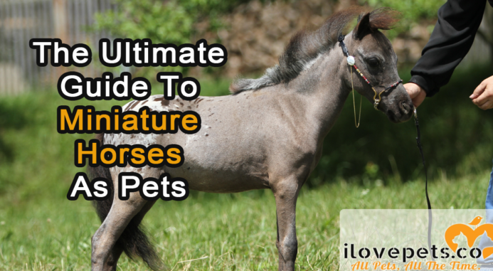 The Ultimate Guide To Miniature Horses As Pets