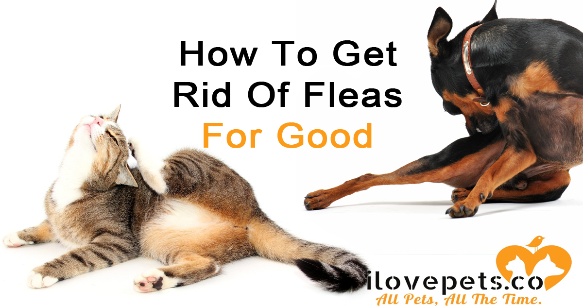 How To Get Rid Of Fleas On Dogs For Good