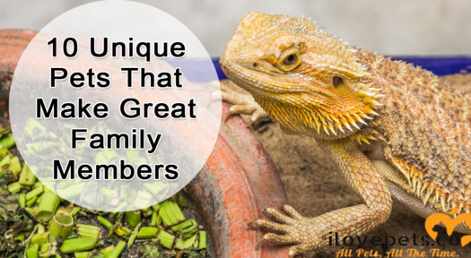 10 Unique Pets That Make Great Family Members