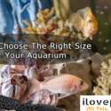 How To Choose The Right Aquarium Tank Size