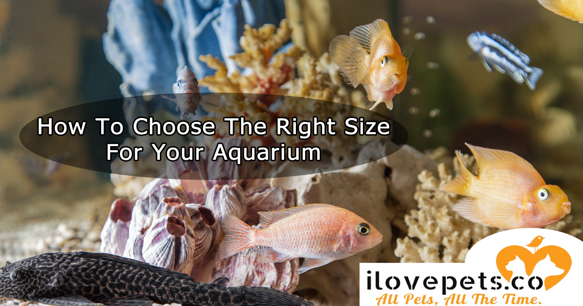 How To Choose The Right Size For Your Aquarium