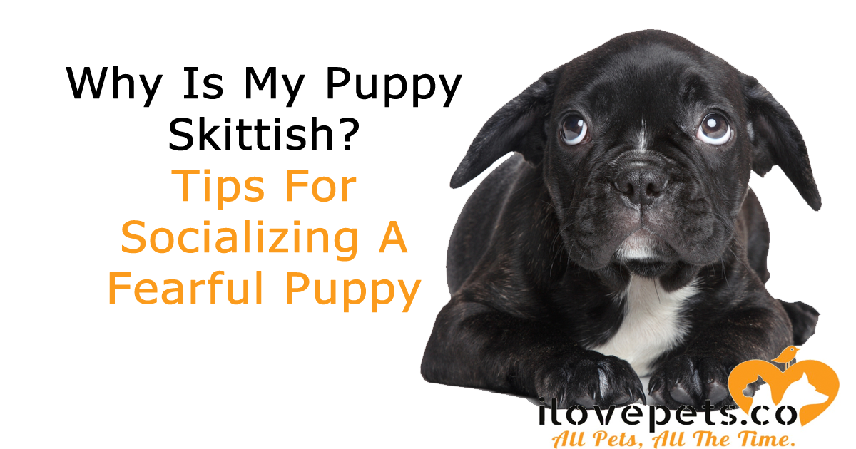 How To Help Your Skittish Puppy #puppytips