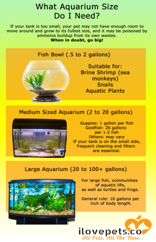 What Aquarium Tank Size Do I Need?