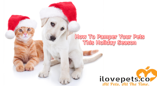 The Best Ways To Pamper All Your Pets This Holiday Season