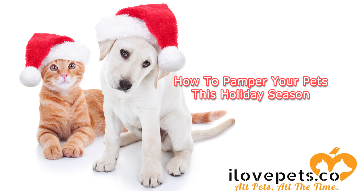 How To Pamper Your Pets This Holiday Season
