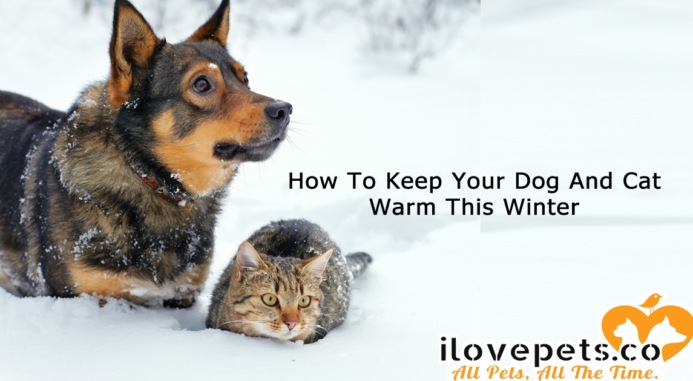 How To Keep Your Dog And Cat Warm This Winter