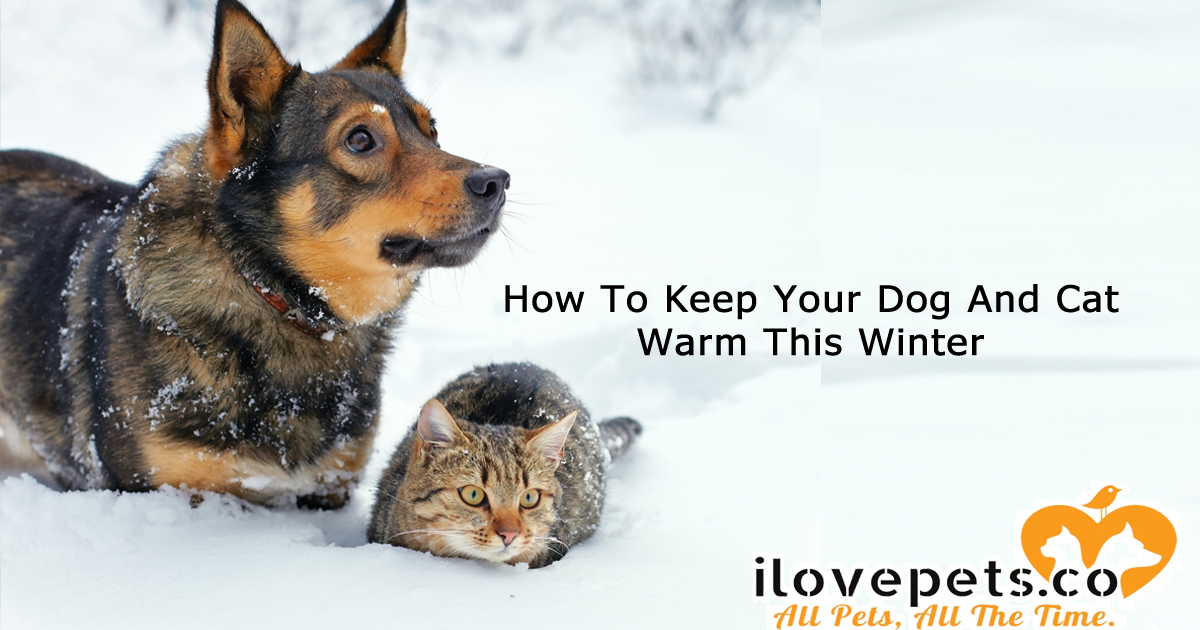 How To Keep Your Pets Warm This Winter