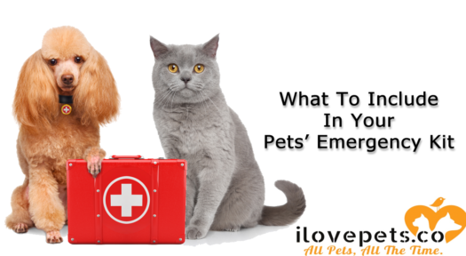 What To Include In Your Pets' Emergency Kits