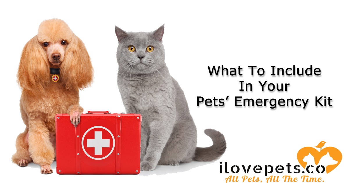 What To Include In Your Pets Emergency Kits