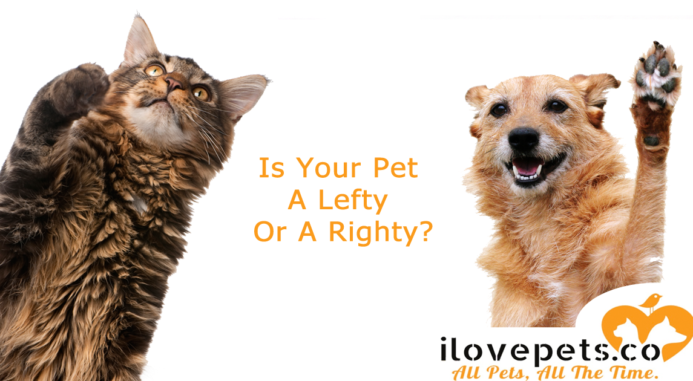 Is Your Pet A Lefty Or A Righty?