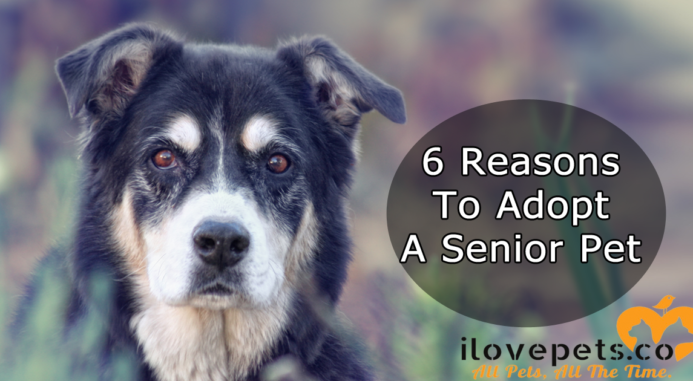 6 Reasons To Adopt A Senior Pet
