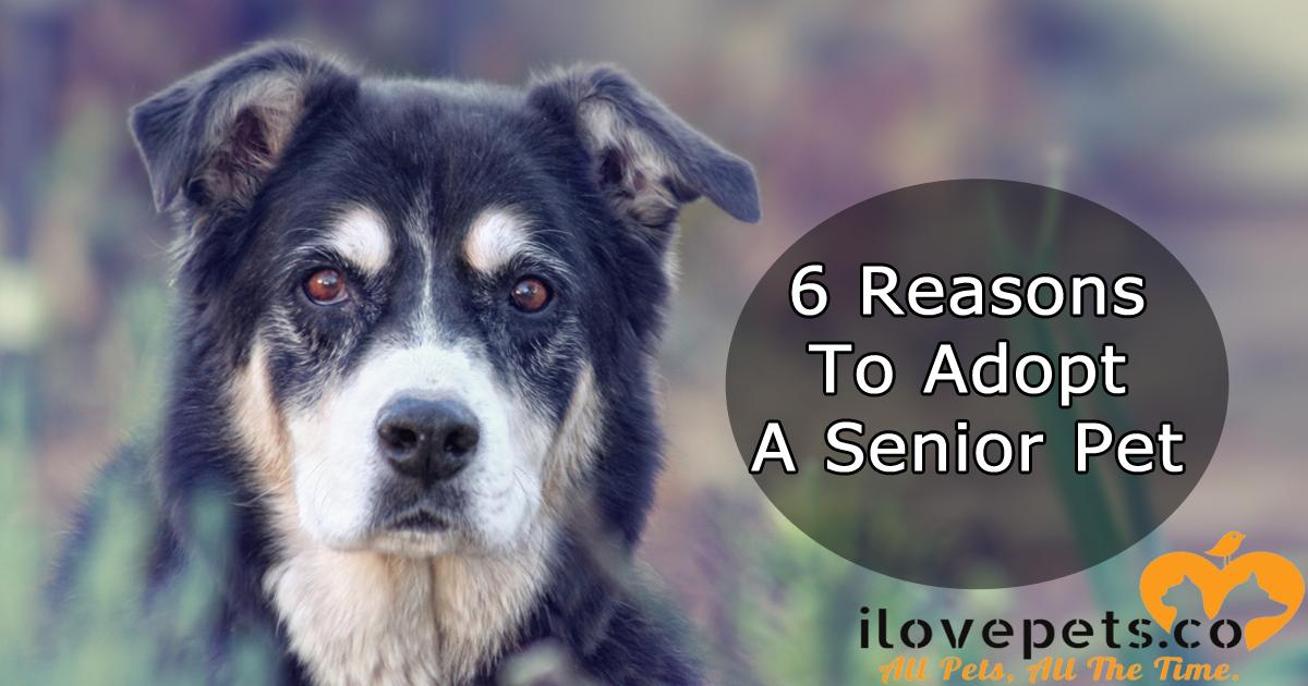 6 Reasons To Adopt A Senior Pet